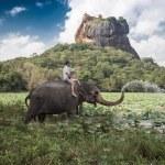 Постер, плакат: Elephant ride