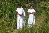 Young local boys on tea plantation — Stock Photo
