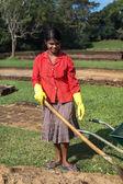 Local woman  gardening in Sigiriya garden complex — Stock Photo