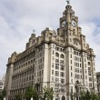 A Pair of Liver Birds on the Royal Liver Building - Stock Photo