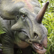 Stock Photo: Prehistoric Styracosaurus in Cretaceous Forest