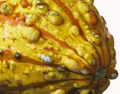 An Orange and Yellow Ornamental Gourd with Dewdrops — Stock Photo