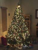 繁星棵圣诞树圣诞前夕 — 图库照片