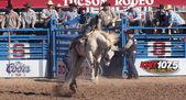 A La Fiesta De Los Vaqueros, Tucson, Arizona — Foto de Stock