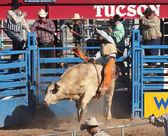 A La Fiesta De Los Vaqueros, Tucson, Arizona — 图库照片