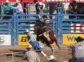 A La Fiesta De Los Vaqueros, Tucson, Arizona — Stock Photo