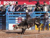 La fiesta de los vaqueros, tucson, arizona — Zdjęcie stockowe