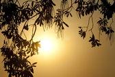 Fondo de verano hermoso con la silueta de un árbol de hoja — Foto de Stock