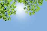 绿色的树叶 — 图库照片