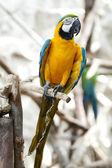 Papagei im zoo — Stockfoto