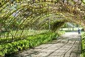 Grüne tunnel aus kalebasse pflanze hergestellt — Stockfoto