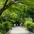 Way to trees in a park — Stock Photo