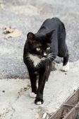 Lonely black street cat — Stock Photo