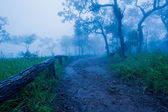 Trails in tropical forests — Stock Photo
