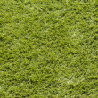 Grass Background. — Stock fotografie #33961317