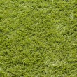 Grass Background. — Foto Stock #33961317