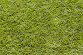 Grass Background. — Stock Photo