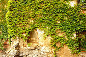 Wall covered with ivy — Stock Photo
