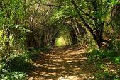 Fairy-tale sunny alley — Stock Photo