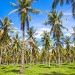 Palms on Gili,  Trawangan island, Indonesia — Stock Photo