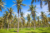 Palms on Gili, Trawangan island, Indonesia — Stock Photo