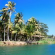 Green palm forest, beautiful  landscape in Baracoa - Stok fotoğraf