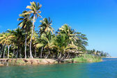 Green palm forest, beautiful landscape in Baracoa — Stock Photo