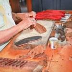 femme le traitement des feuilles de tabac et la fabrication des cigares — Photo
