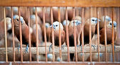Litle birds in the cage. — Stock Photo