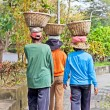 Stock Photo: Balancing basket. Balinese woman walks with basket on the head.