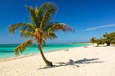 Caribbean Island Paradise , Cuba — Stock Photo