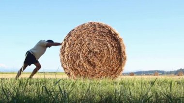 Hay bales on the field after harvest — Stock Video