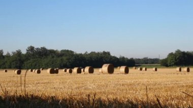 Birds and haybales — Stok video