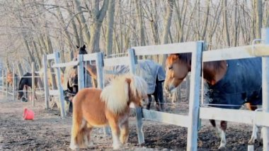 Horse and pony — Stock Video #12624643