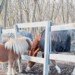 Pony and horse are plaing — Stock Video #12647814