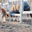 Pony horse — Stock Video #12648075