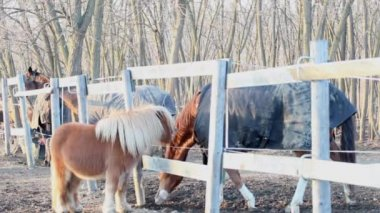 Pony and horse are plaing — Stockvideo