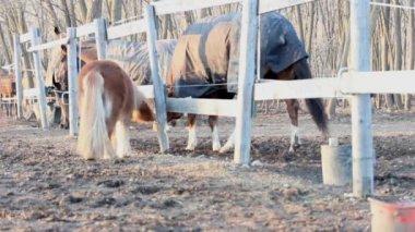 Pony horse — Stock Video