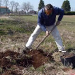 A man shovels a hole in the yard, preparing to plant a tree — Stock Video