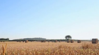 Hay bales on the field after harvest — Vidéo