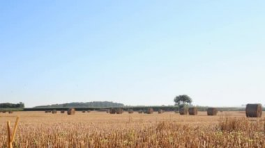 Hay bales on the field after harvest — Stok video