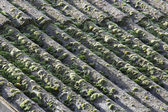 Asbestos cement panels — Stock Photo