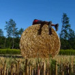 Hay bale fitness — Stock Video #18027829