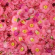 Camellia flower background — Stock Photo