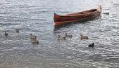 Boat and ducks — Stock Photo