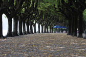 Tree-lined avenue — Stock Photo
