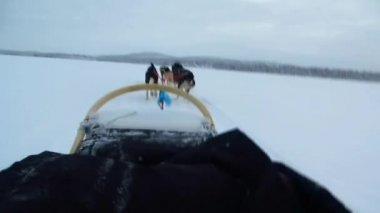 Sanki psy w szybkich wyścigów — Wideo stockowe
