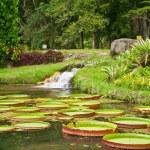 Botanical garden in Rio de Janeiro — Stock Photo #22780790