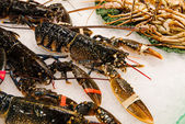 Fresh great crabs, shrimps and lobster at the market La Boqueria in Barcelona — Stock Photo