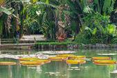 Botanischer Garten in Rio De janeiro — Stockfoto